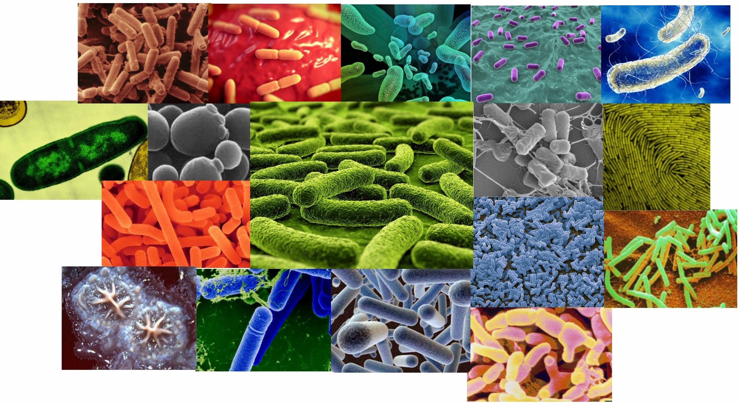 вид самые лучшие бактерии для пола горло
