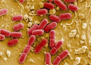 Выбор бактерий для септика